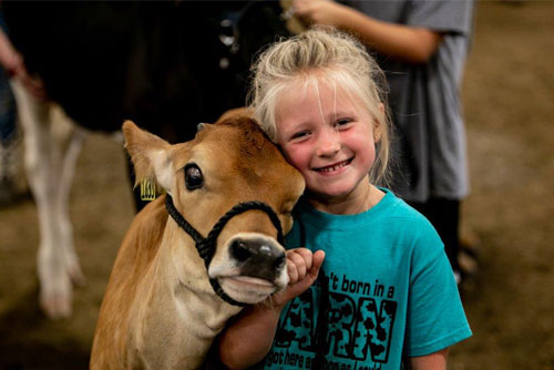 The Hartford Fair Little Girl With A Cow